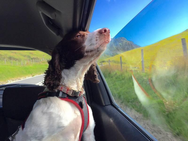 Krećete li na put sa psom, evo na što sve biste morali pripaziti