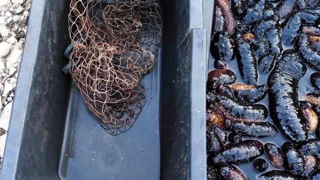 Bez dozvole je ulovio 106 kila trpova: Vratili su ih u more