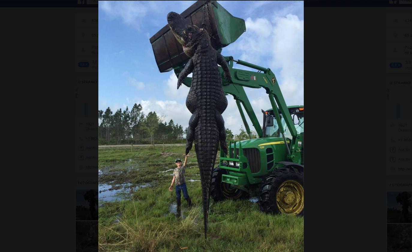 Ubili aligatora od 4,5 metara: Proždirao im je krave na farmi