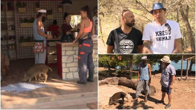 Petrunjela napravila kaos na farmi: 'Svinji je mjesto u štali'