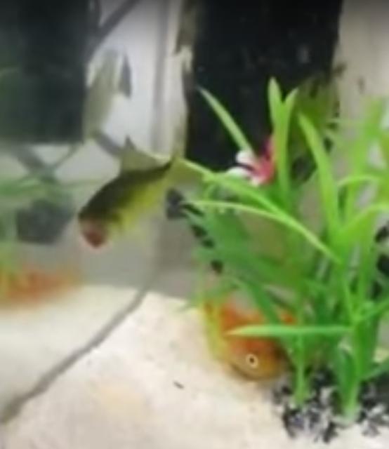 Obezglavljena riba