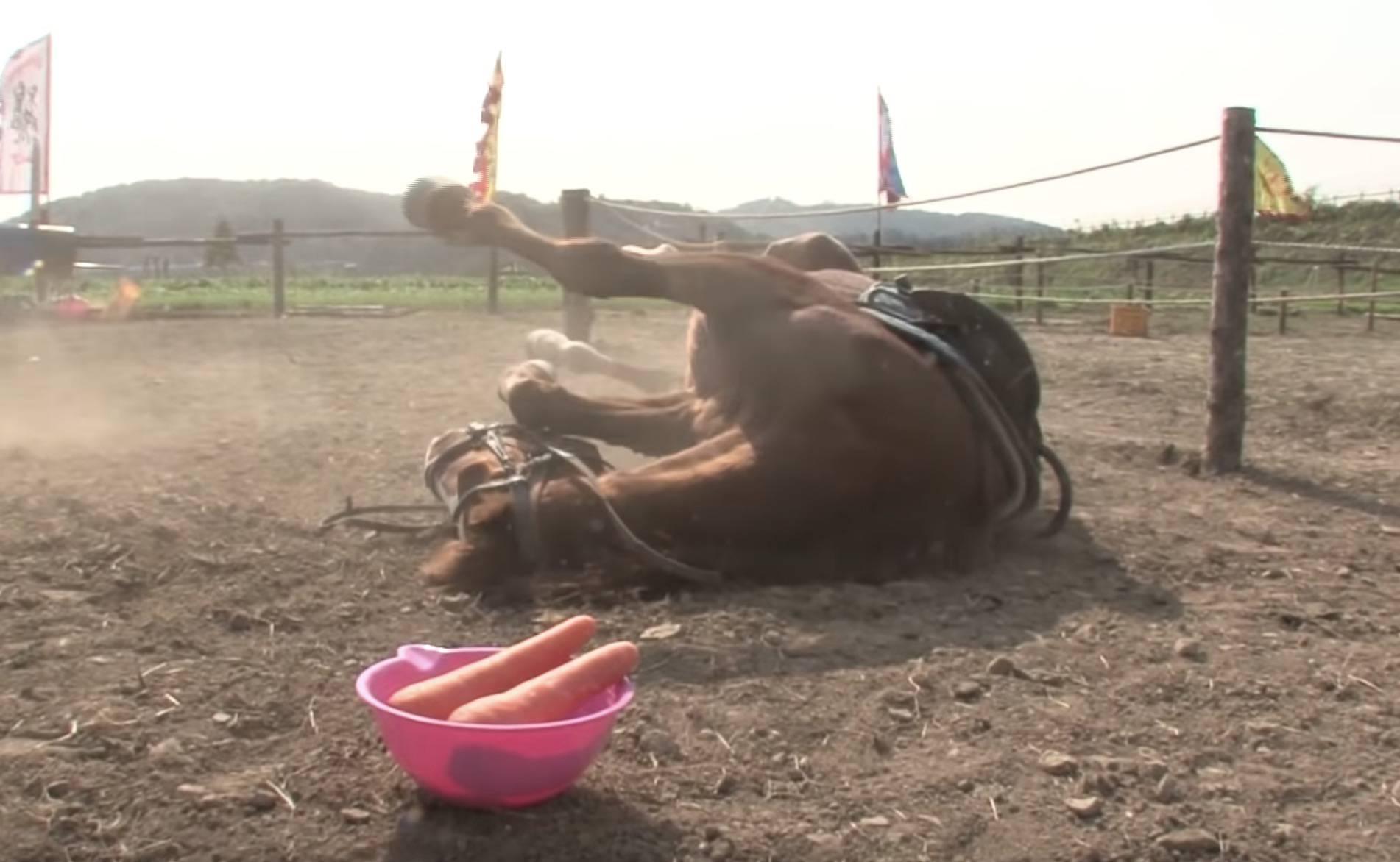 Konj glumi da je mrtav svaki put kad ga netko poželi jahati