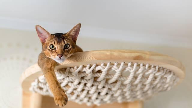 U Hrvatskoj se sterilizira dvostruko manje mačaka nego u Europskoj uniji