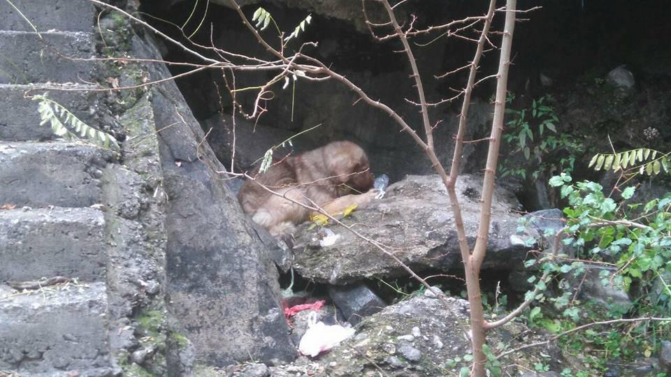 GSS spasio prestrašenog psića zarobljenog ispod velike brane