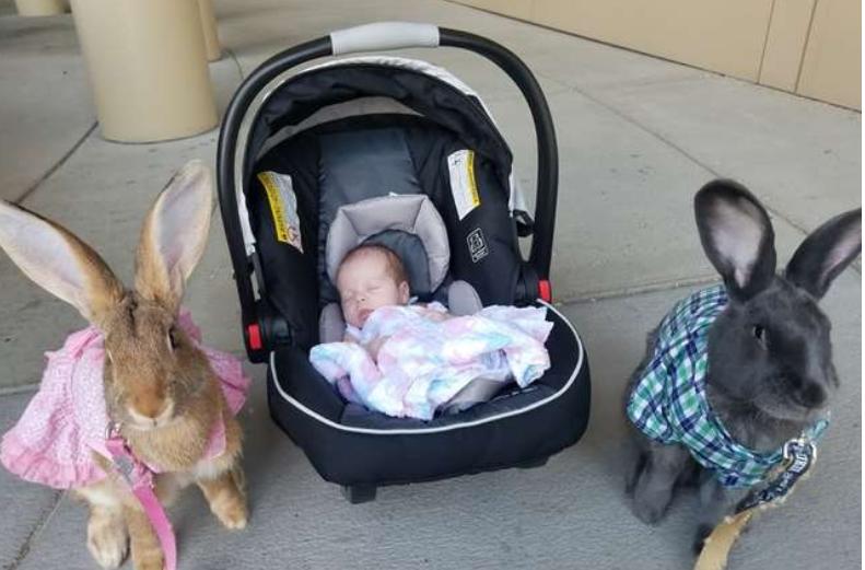 Par divovskih zečeva odlučio: Mi čuvamo našu malu sestricu!
