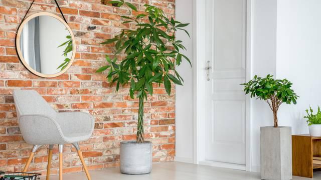 Kupnjom sobne biljke povratite osjećaj kontrole u svojem životu