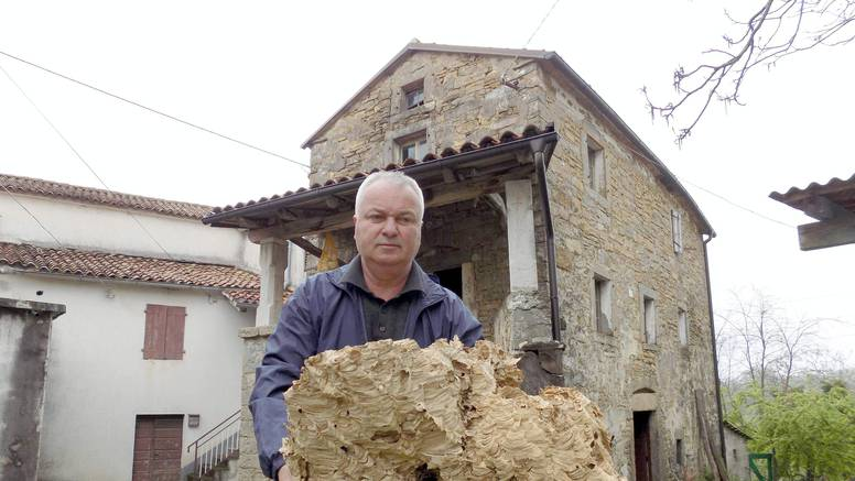 'Na tavanu je godinama bujalo golemo stršljenovo gnijezdo! U njemu ih je valjda bilo na tisuće'