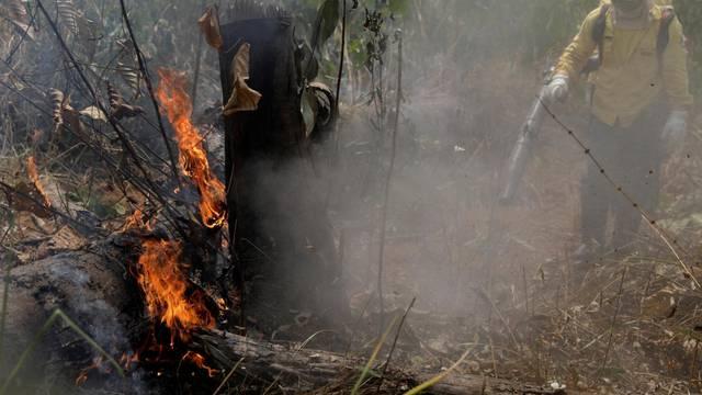 Firefighters extinguish a fire in Amazon jungle in Porto Velho