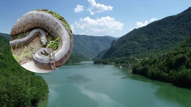 Zabranili su kupanje: Anakonda je u jezeru, ne mogu je uhvatiti