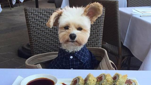 Od gladne lutalice do gurmana: Psić Popaj uživa u restoranima