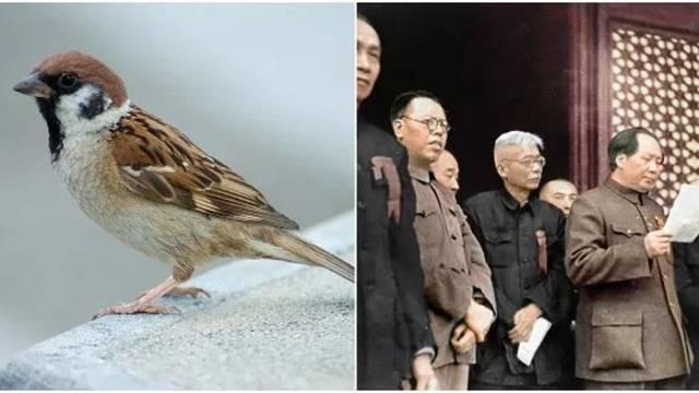 Mao Ze Dong i ubijanje vrabaca