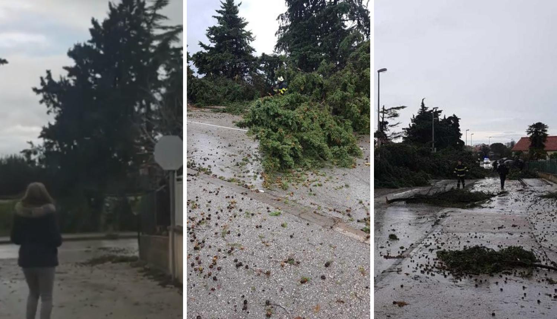 Oluja u Zadru: Pijavica srušila bor kraj žene, jedva se spasila