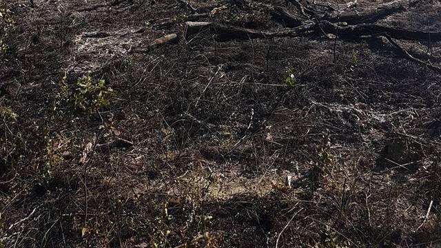 Požar na Promini još gasi 90 vatrogasaca, u Zatonu ugašen
