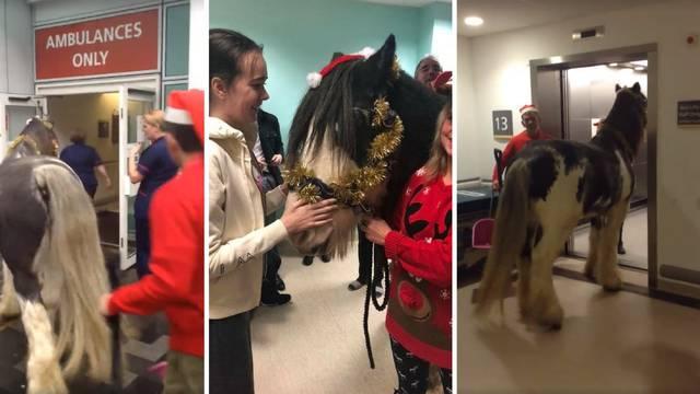 London: Dovela sestri konja u bolnicu