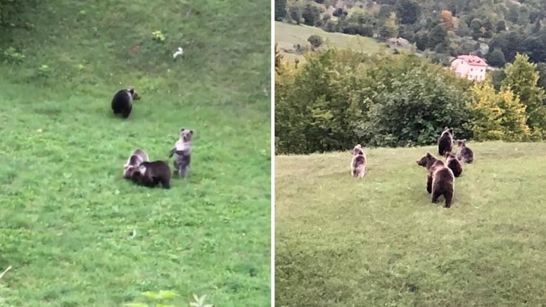 Pogledajte čudesni video: Prvi put u Hrvatskoj snimili mamu medvjedicu s četiri mladunca!