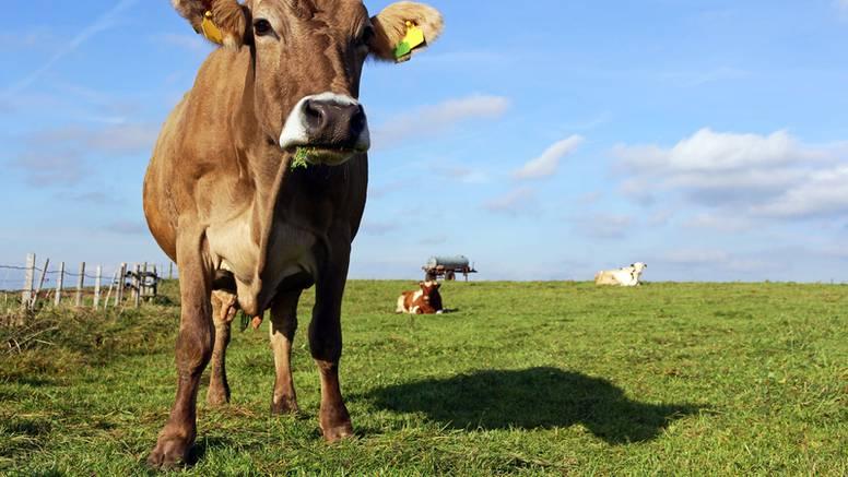 Gates: Bogate zemlje bi trebale jesti samo sintetičku govedinu