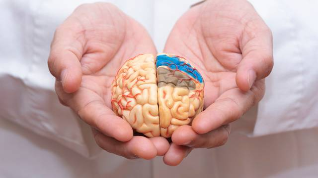 Doctor,Using,Finger,To,Hold,A,Brain,Model,With,Both
