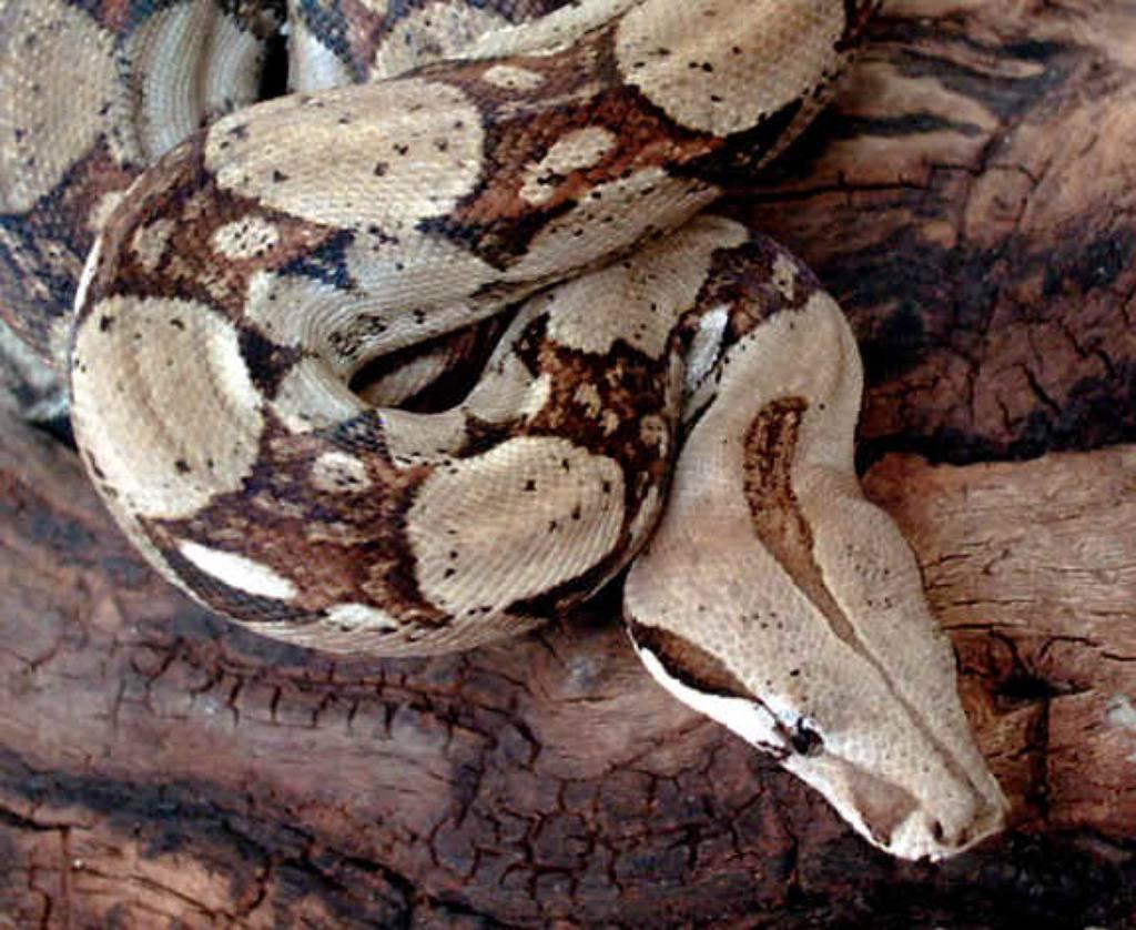 snakesite.info