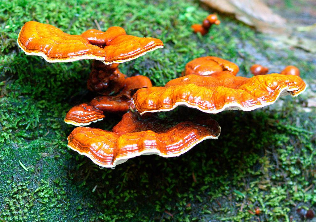 Najnovije spoznaje o ljekovitosti gljiva