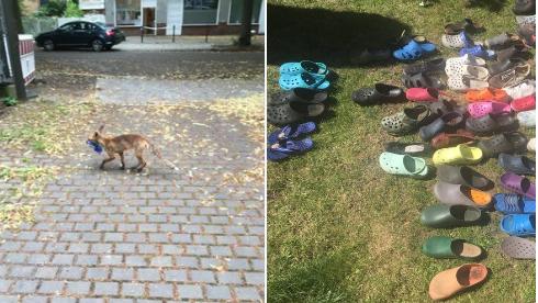 Neobičan lopov u predgrađu Berlina krade samo - kroksice
