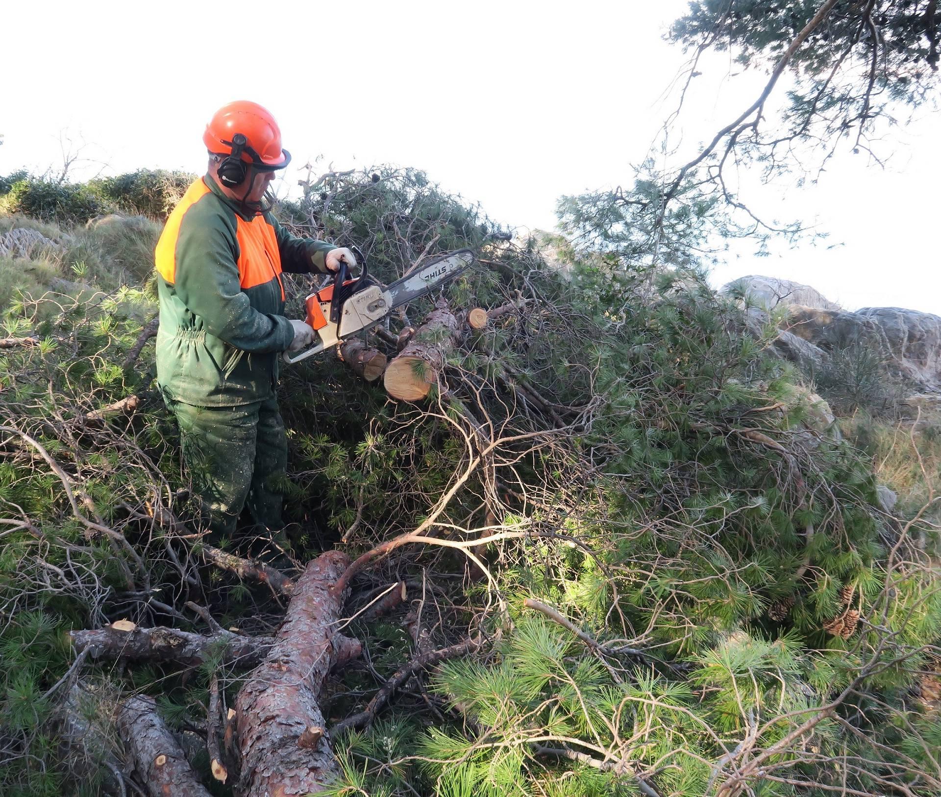 Split: Radnici Park ??ume Marjan ukljanjaju oboljela stabla