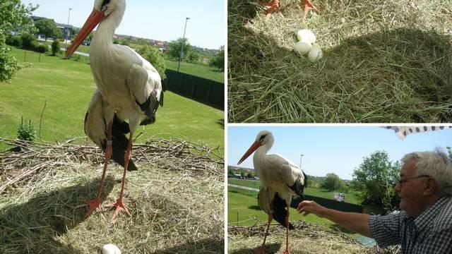 Klepetan ili dvojnik? Malena i njezin 'novi' rodan griju tri jaja
