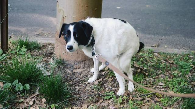 Znate li zašto vas pas gleda u oči dok vrši nuždu? Koji razlog!