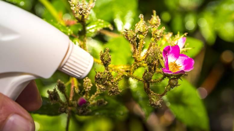 10 načina na koje ocat u vrtu može pomoći u njegovom rastu