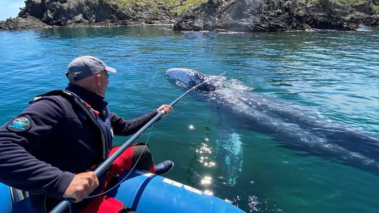 Kit Wally zalutao je na Mediteran, zbog manjka hrane možda ne preživi put do doma