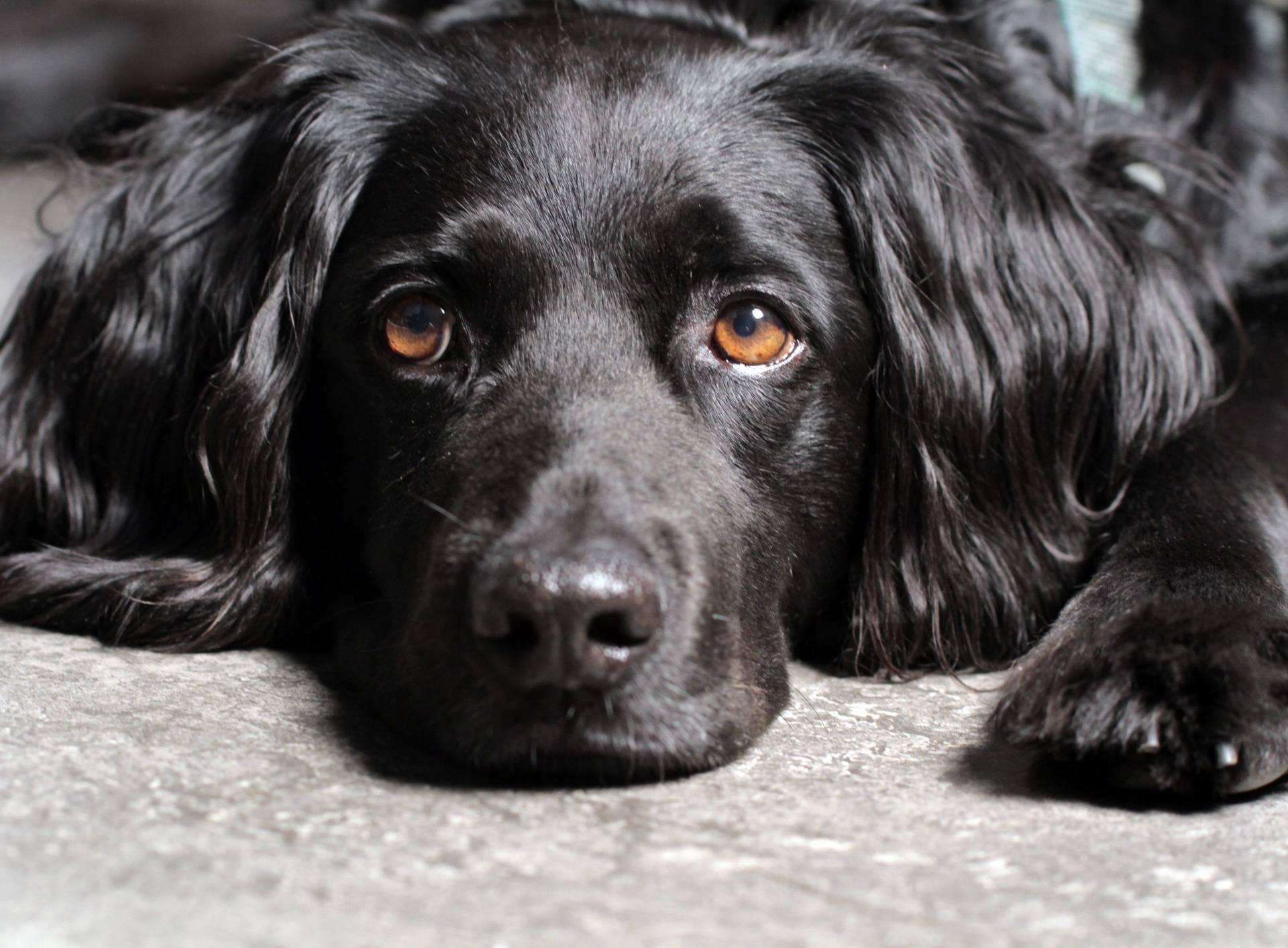 Mahanje repom nije uvijek znak dobrog raspoloženja kod psa
