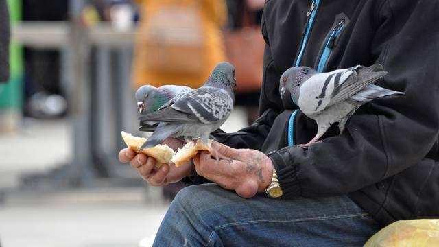 Pula: U centru grada golubovi su od prolaznika 'dobili ručak'