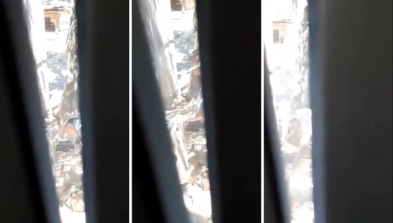 Strava kod Daruvara: Mučio je tri odrasla psa i četvero štenadi