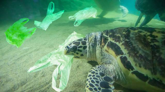 Sea Turtle eat plastic bag ocean pollution concept
