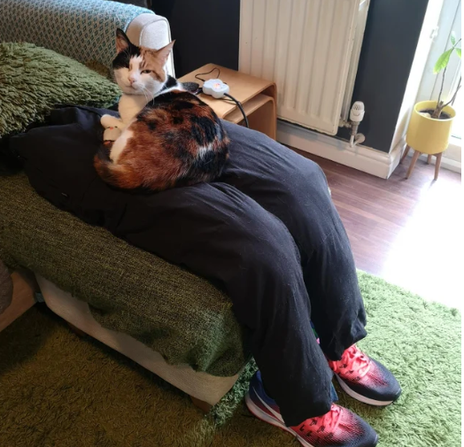 Par se dosjetio kako će smiriti 'osjetljivu' mačku dok oni rade