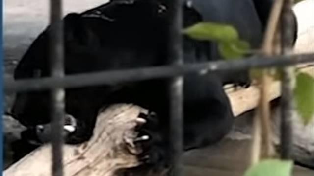Dok je snimala selfie u ZOO-u: Ženu zgrabio i ozlijedio jaguar