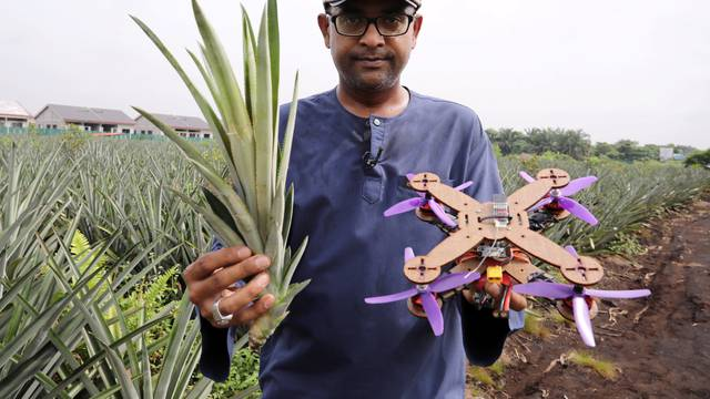 University Putra Malaysia professor Mohamed Thariq holds pineapple leaves and a drone partially made with pineapple stems, in Jenjarom