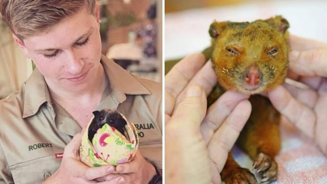 Obitelj velikog srca: Spasili su 90 tisuća australskih životinja