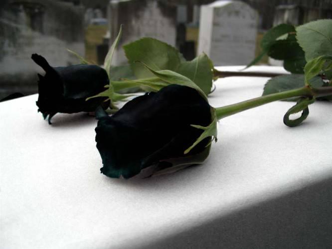 Misterij Crne ruže: Nevidljiva i moćna ruka gura mlade u smrt