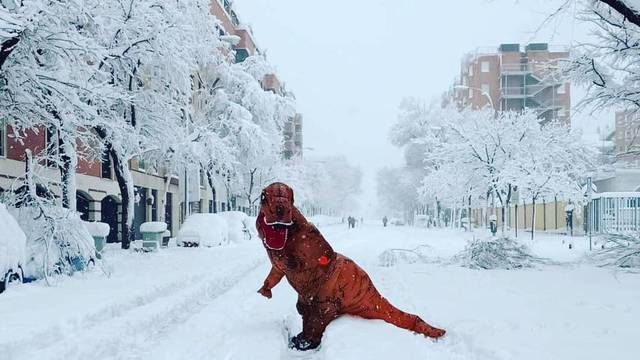 T-Rex checks out snow in Madrid