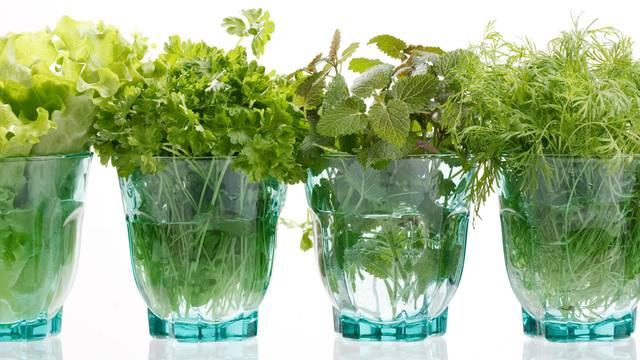 Nema prljanja prstiju u zemlji: Vrtlari su otkrili koje povrće možete sami uzgojiti kod kuće