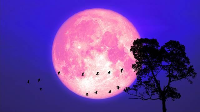 Ružičasti Mjesec na nebu će se pojaviti pred svitanje u 5:32
