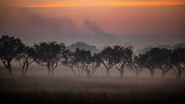 Romantična jesen: Maslinici kraj Pule u maglenom plaštu