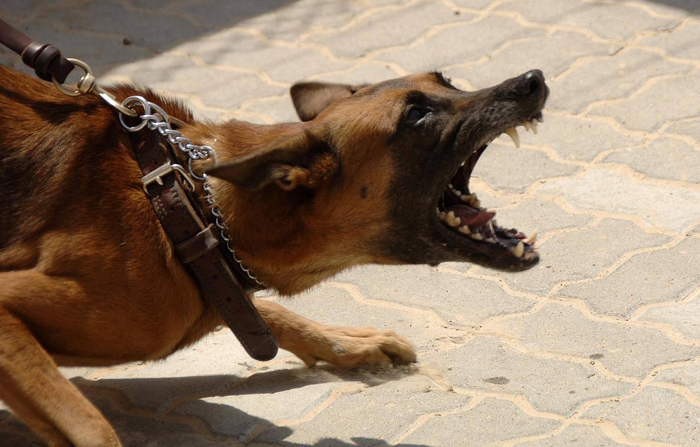 Split: Napao ga čopor od desetak pasa, jedan ga ugrizao