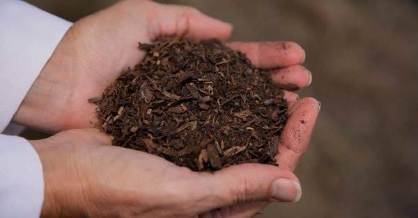 Kompostiranje ljudi: Od praha si nastao, u prah se pretvaraš