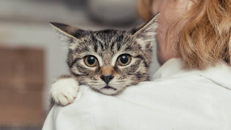 Stvari koje mogu biti štetne za mačke, a vlasnici ih imaju u kući