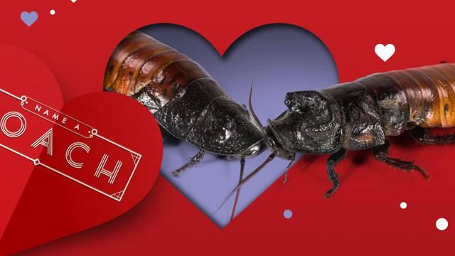 Koja romantika! Dajte žoharu ime sadašnje ili bivše ljubavi