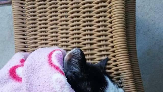 Evo, i mačak Lučki vam svima poručuje: 'Svi ostanite doma!'