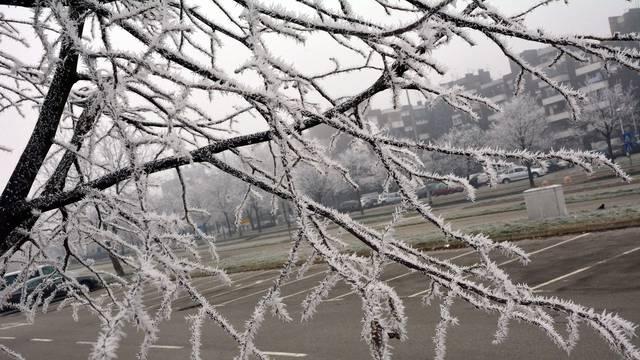 Elementarna nepogoda zbog mraza: Šteta 50 milijuna kuna
