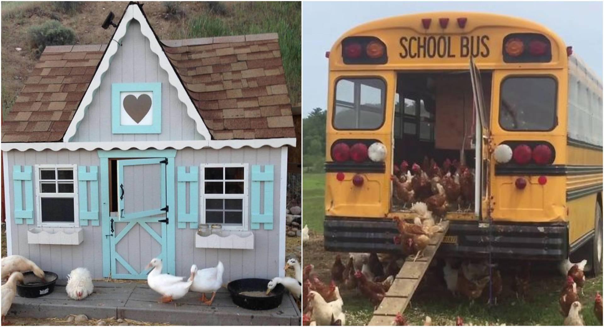 Kreativni kokošinjac