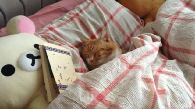 Ušuškane mace spavaju - novi hit osvojio društvene mreže